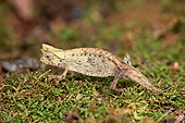 REP 03 AC0025 01