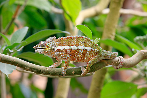 REP 03 AC0027 01