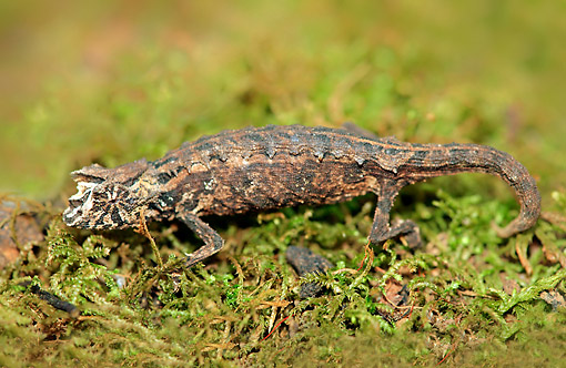 REP 03 AC0033 01