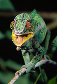 REP 03 MC0001 01