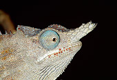 REP 03 MH0020 01