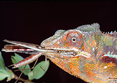 REP 03 MH0025 01