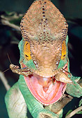 REP 03 MH0026 01