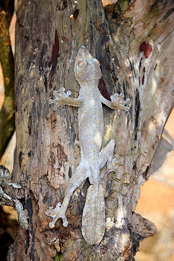 REP 04 AC0012 01