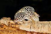 REP 04 GL0001 01