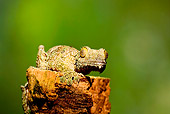 REP 04 JZ0001 01