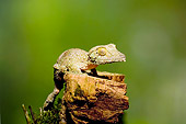 REP 04 JZ0002 01