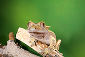 REP 04 JZ0004 01