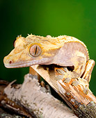 REP 04 JZ0005 01