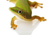 REP 04 MH0001 01