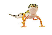 REP 04 MH0002 01