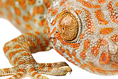 REP 04 MH0006 01