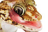 REP 04 MH0007 01