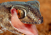 REP 04 MH0014 01
