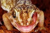 REP 04 MH0015 01