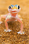 REP 04 MH0020 01