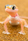 REP 04 MH0021 01