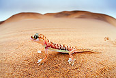 REP 04 MH0024 01
