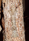 REP 04 MH0026 01
