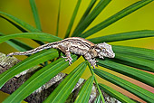 REP 04 TK0034 01
