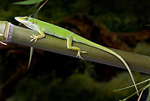 REP 04 WF0003 01