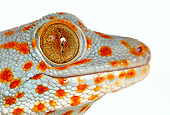 REP 04 KH0003 01