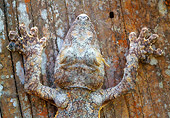 REP 04 NE0001 01