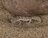 REP 04 RK0003 01
