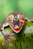 REP 04 TK0002 01