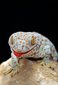 REP 04 TK0004 01