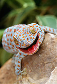 REP 04 TK0005 01