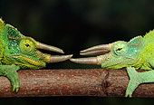 REP 04 TK0006 01