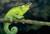 REP 04 TK0009 01