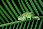 REP 04 TK0023 01