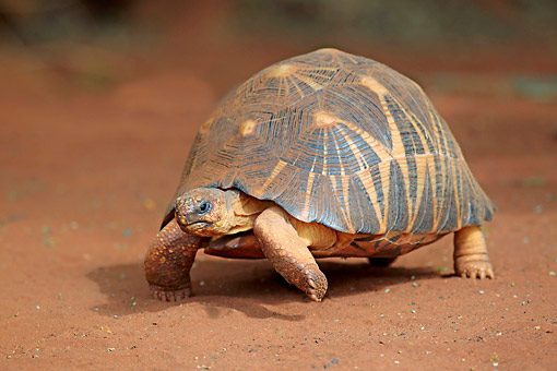 REP 06 AC0011 01