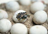 REP 06 GL0001 01