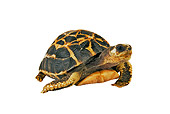 REP 06 MH0002 01