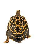 REP 06 MH0003 01