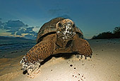 REP 06 MH0005 01