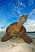 REP 06 MH0006 01