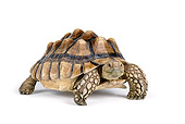 REP 06 RK0008 01