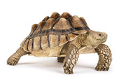 REP 06 RK0008 02