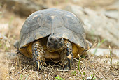 REP 06 WF0001 01