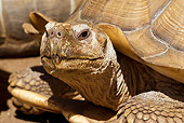 REP 06 WF0004 01