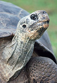 REP 06 GR0001 01