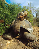 REP 06 JZ0001 01