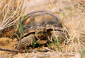 REP 06 TL0001 01