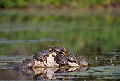 REP 06 TL0004 01