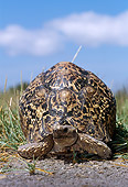 REP 06 TL0006 01