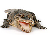 REP 07 RK0001 13